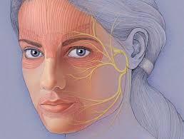 Facial nerve 1