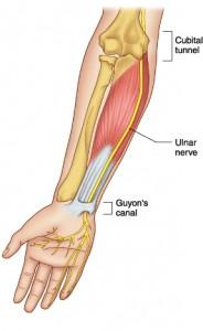 Ulnar nerve 3